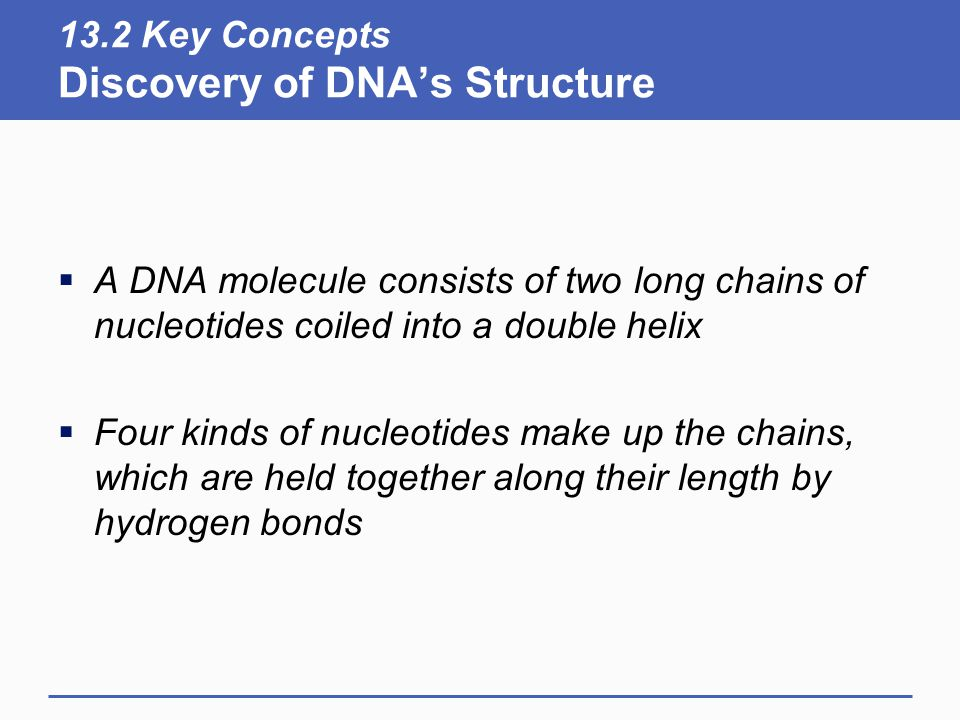 13.2 Key Concepts Discovery of DNA's Structure  A DNA molecule consists of two long chains of nucleotides coiled into a double helix  Four kinds of