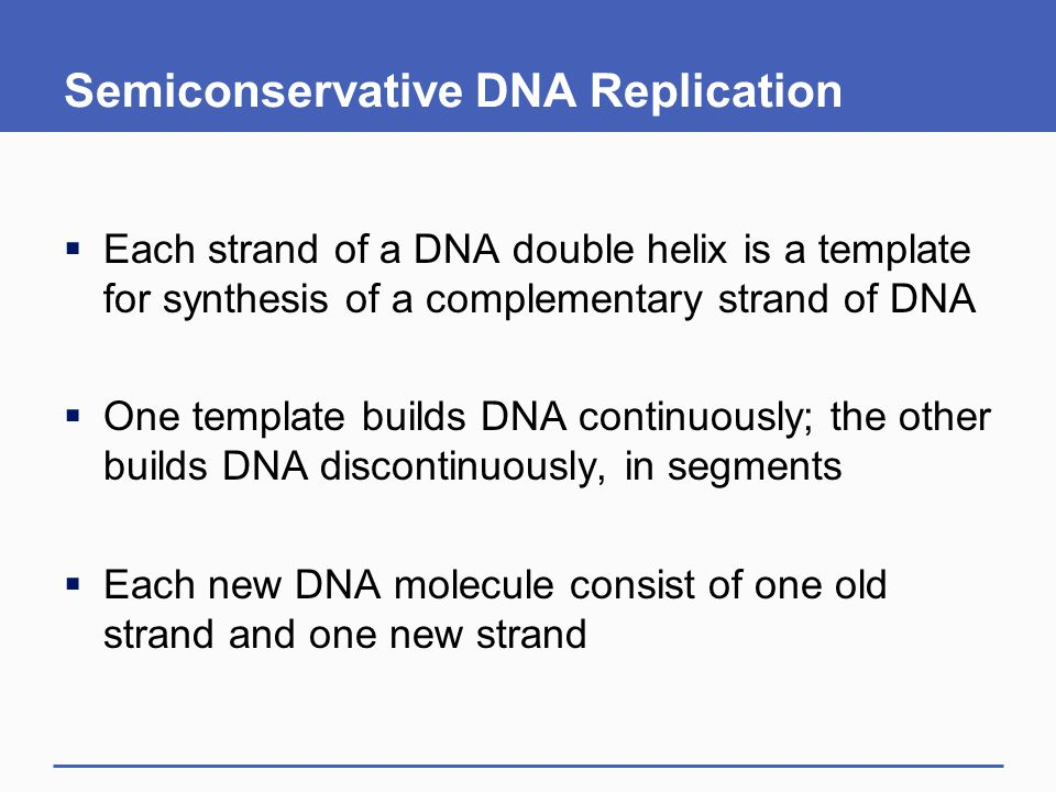 Semiconservative DNA Replication  Each strand of a DNA double helix is a template for synthesis of a complementary strand of DNA  One template build