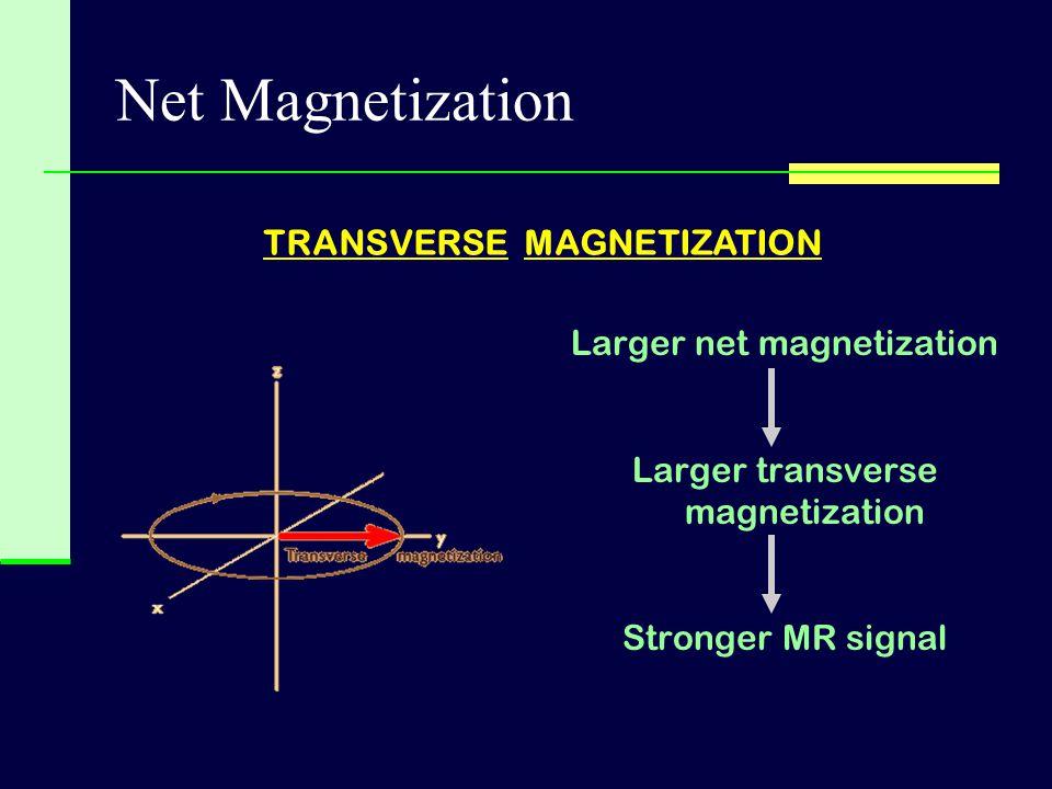 Larger net magnetization Larger transverse magnetization Stronger MR signal TRANSVERSE MAGNETIZATION Net Magnetization