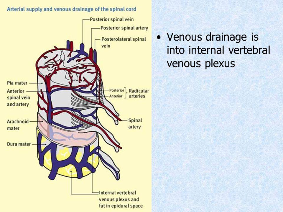 Venous drainage is into internal vertebral venous plexus