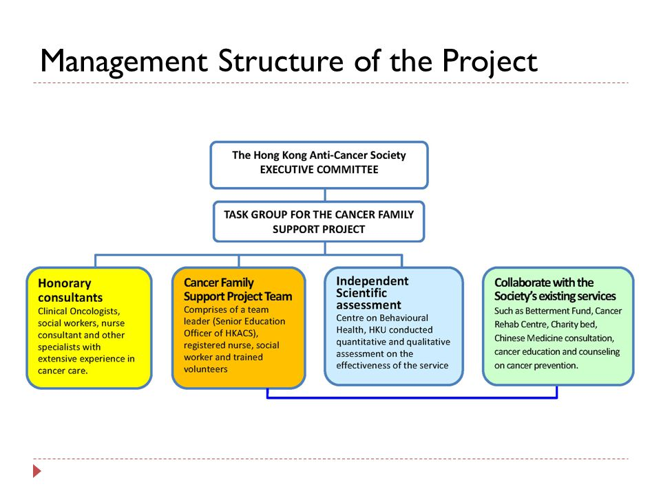 Management Structure of the Project