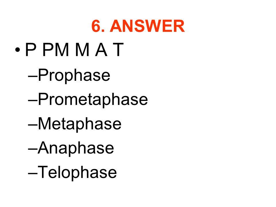6. ANSWER P PM M A T –Prophase –Prometaphase –Metaphase –Anaphase –Telophase