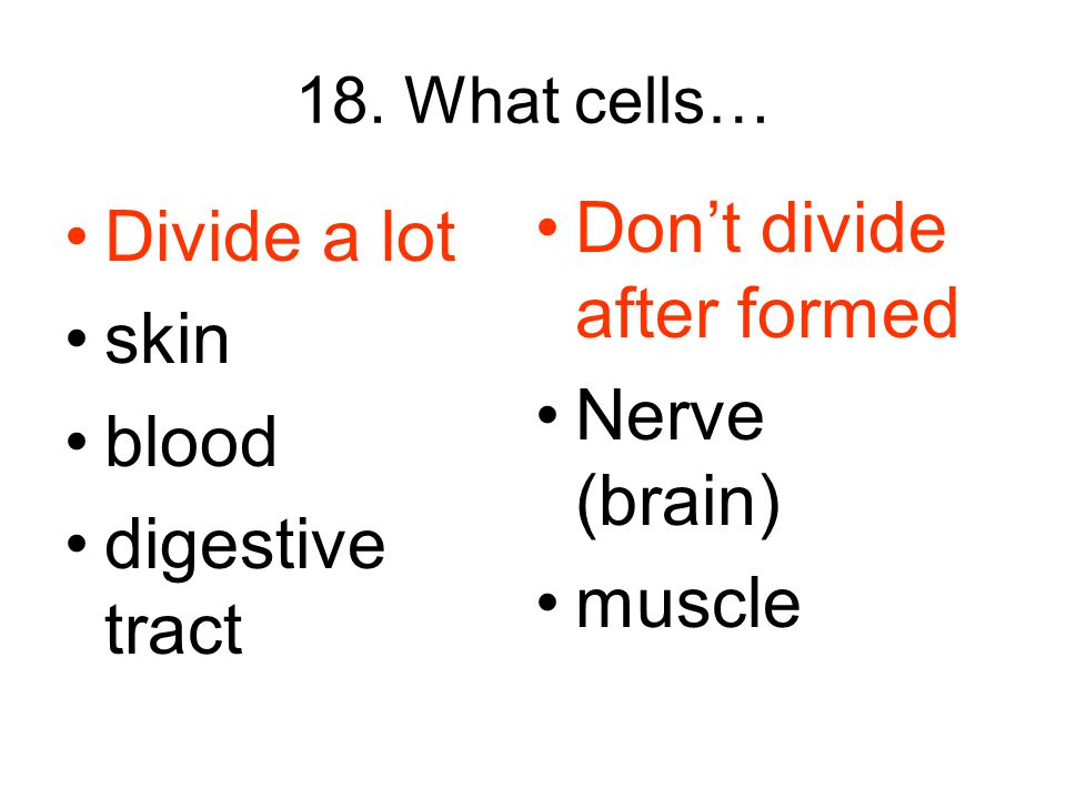 18. What cells… Divide a lot skin blood digestive tract Don't divide after formed Nerve (brain) muscle