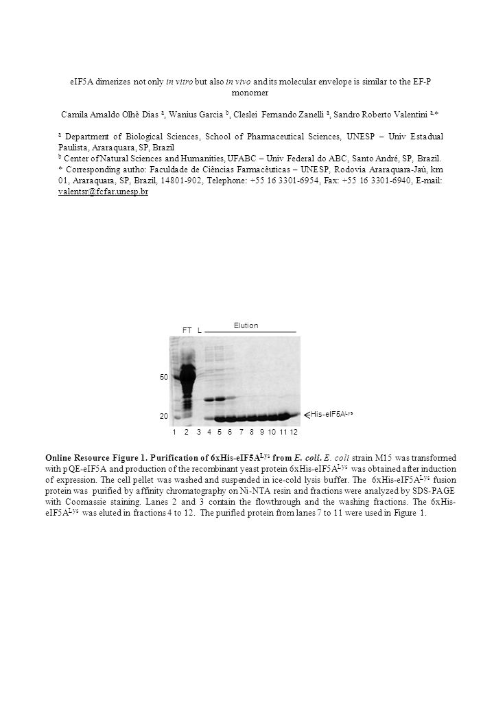 Online Resource Figure 2.SDS-PAGE of eIF5A proteins purified from bacteria and yeast.