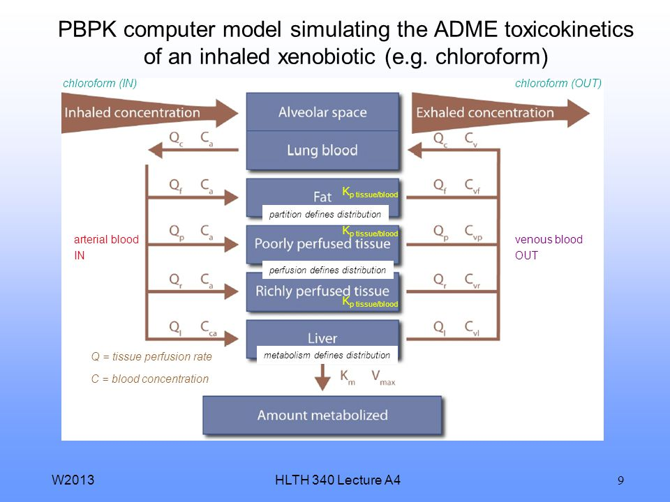 HLTH 340 Lecture A4W2013 9 PBPK computer model simulating the ADME toxicokinetics of an inhaled xenobiotic (e.g.