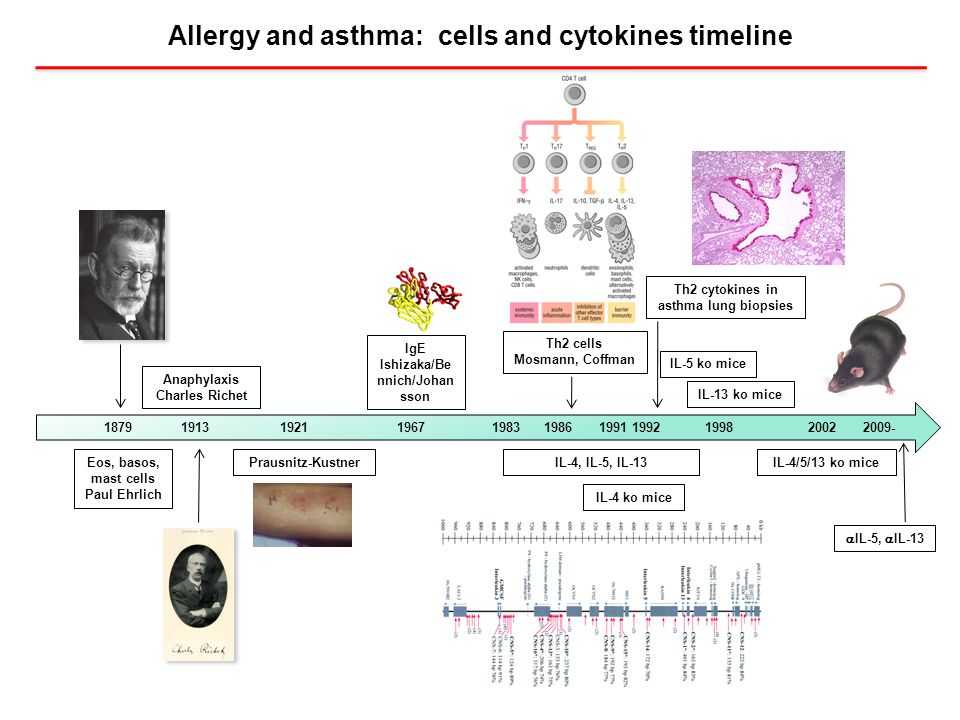 Allergy and asthma: cells and cytokines timeline Eos, basos, mast cells Paul Ehrlich Anaphylaxis Charles Richet 1879 1913 1921 1967 1983 1986 1991 199