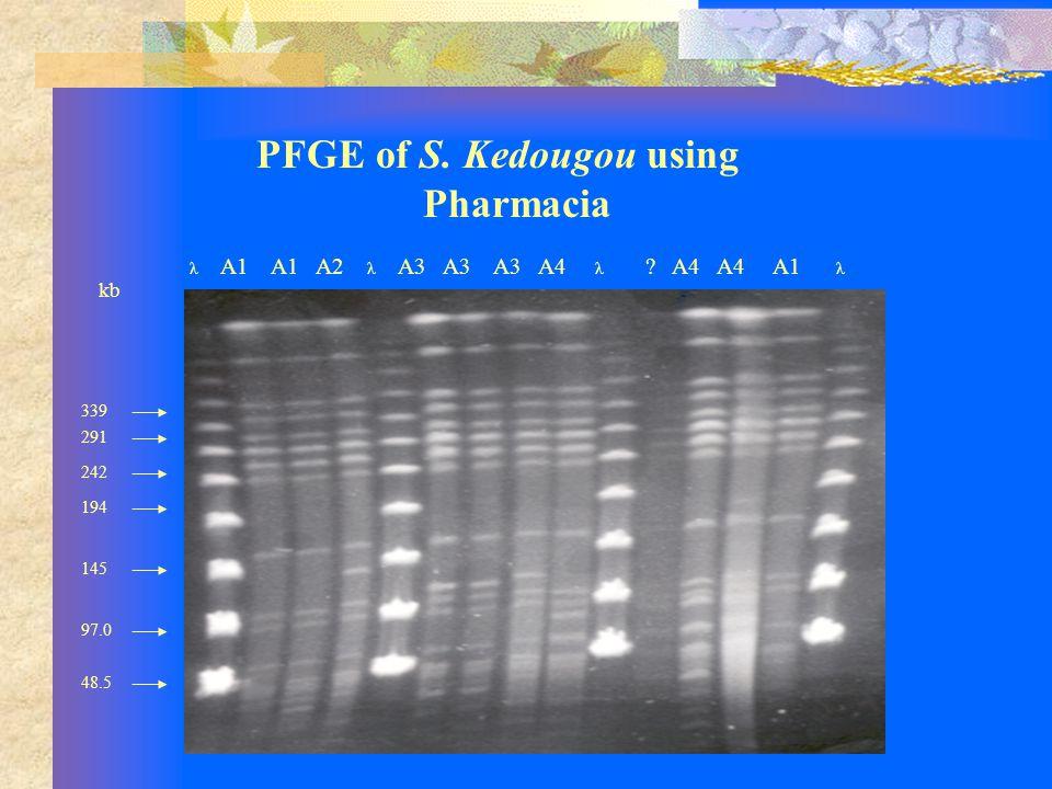 PFGE of S. Kedougou using Pharmacia λ A1 A1 A2 λ A3 A3 A3 A4 λ .