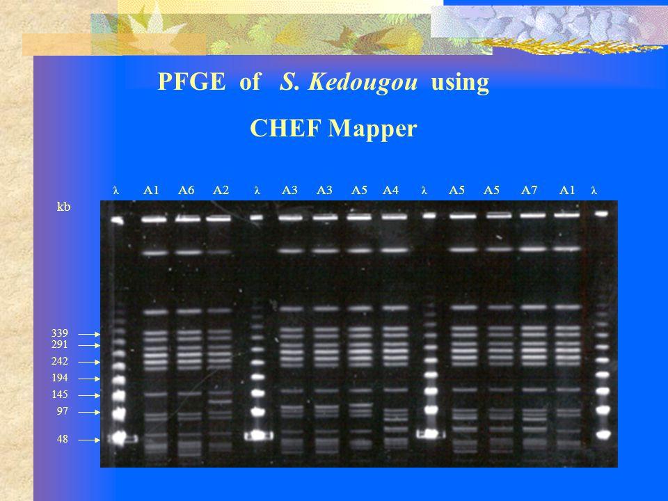 PFGE of S.
