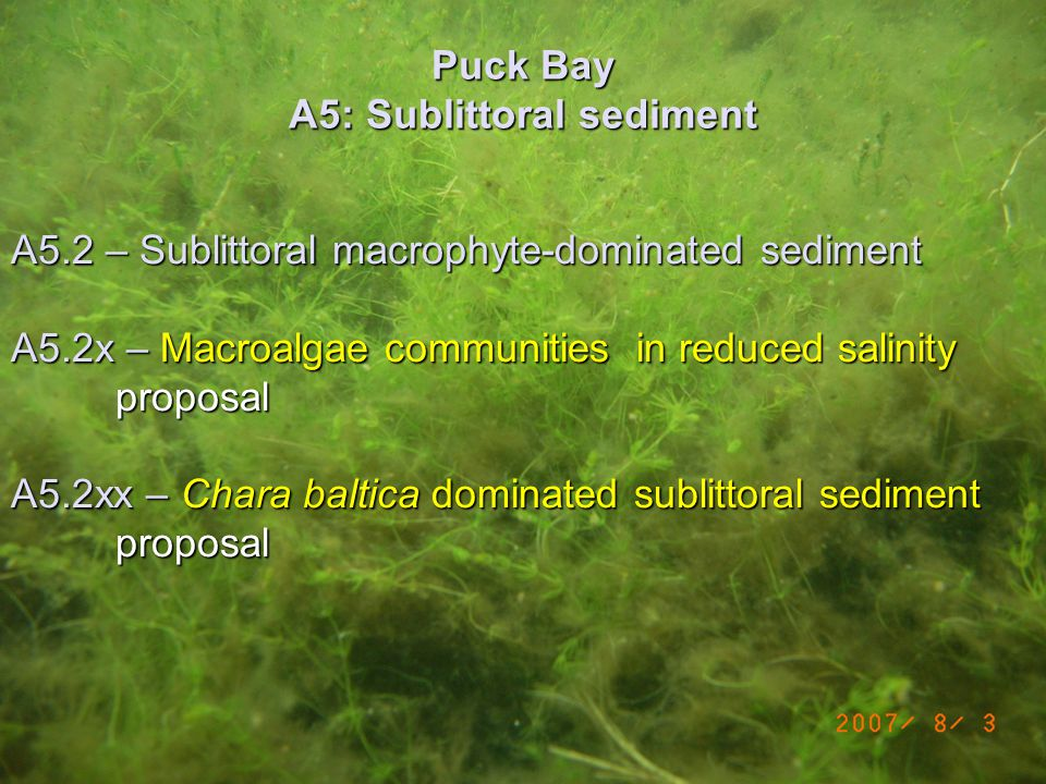 Puck Bay A5: Sublittoral sediment A5.2 – Sublittoral macrophyte-dominated sediment A5.2x – Macroalgae communities in reduced salinity proposal A5.2xx – Chara baltica dominated sublittoral sediment proposal