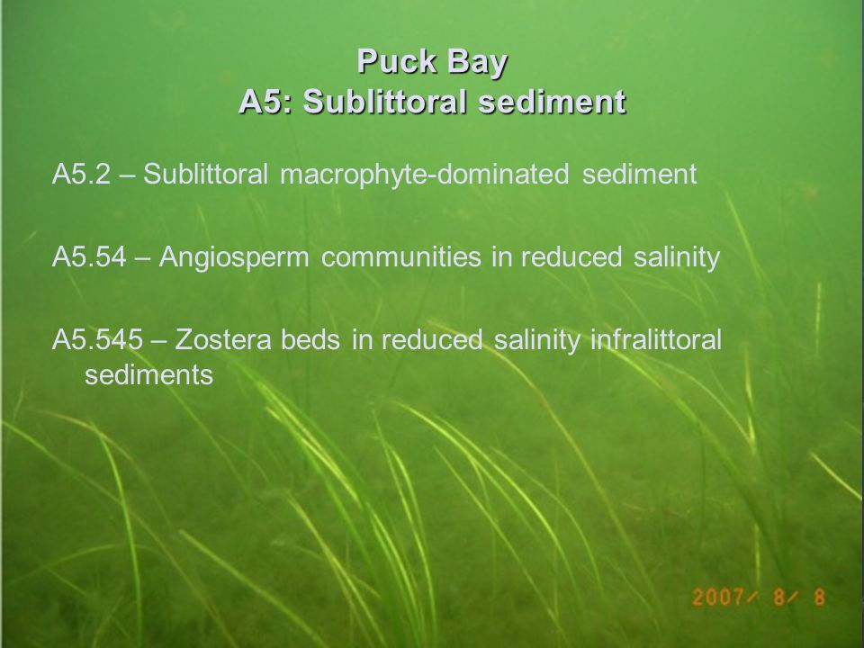 Puck Bay A5: Sublittoral sediment A5.2 – Sublittoral macrophyte-dominated sediment A5.54 – Angiosperm communities in reduced salinity A5.545 – Zostera beds in reduced salinity infralittoral sediments