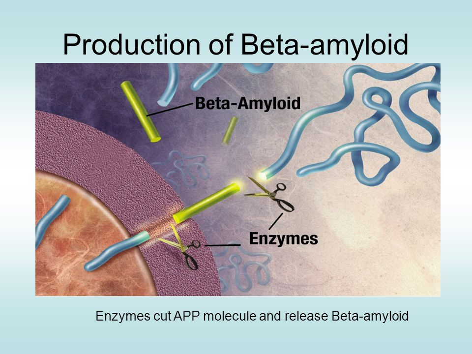 Production of Beta-amyloid Enzymes cut APP molecule and release Beta-amyloid