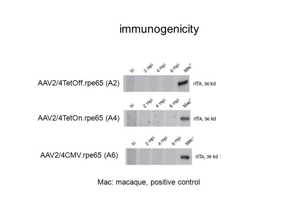 immunogenicity AAV2/4TetOff.rpe65 (A2) AAV2/4TetOn.rpe65 (A4) AAV2/4CMV.rpe65 (A6) Mac: macaque, positive control