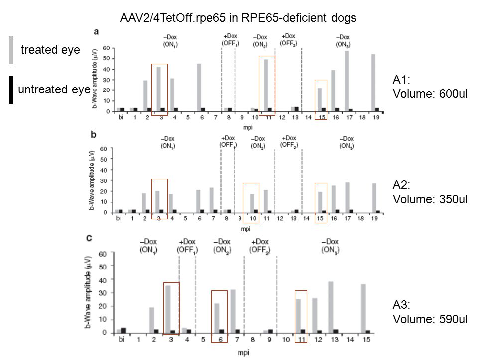 AAV2/4TetOff.rpe65 in RPE65-deficient dogs A1: Volume: 600ul A2: Volume: 350ul A3: Volume: 590ul untreated eye treated eye