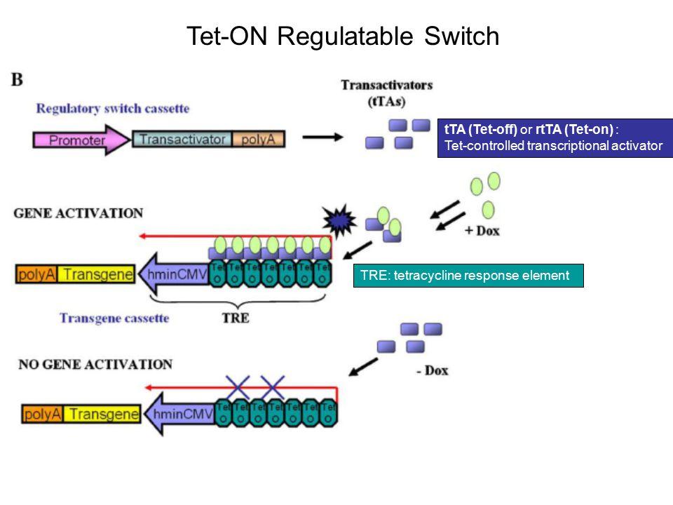Tet-ON Regulatable Switch tTA (Tet-off) or rtTA (Tet-on) : Tet-controlled transcriptional activator TRE: tetracycline response element