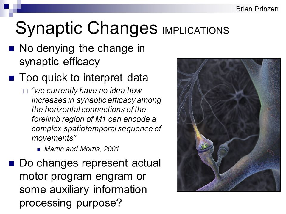 "Synaptic Changes IMPLICATIONS No denying the change in synaptic efficacy Too quick to interpret data  ""we currently have no idea how increases in syn"