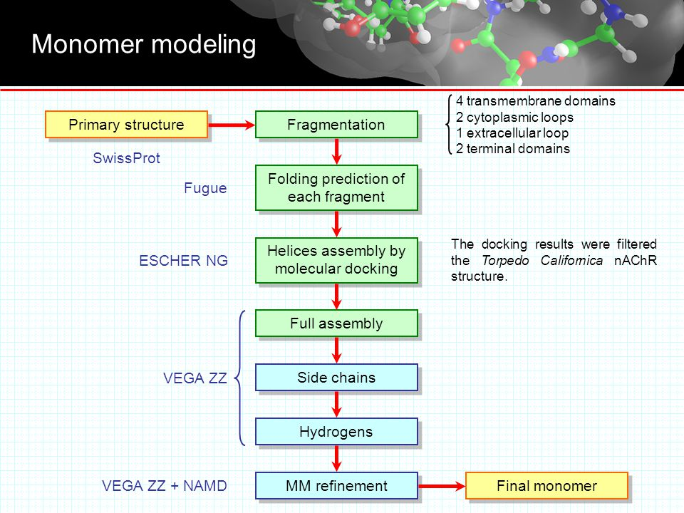Monomer modeling Primary structure Fragmentation Folding prediction of each fragment Helices assembly by molecular docking Side chains Hydrogens MM refinement Final monomer VEGA ZZ VEGA ZZ + NAMD ESCHER NG Fugue SwissProt Full assembly 4 transmembrane domains 2 cytoplasmic loops 1 extracellular loop 2 terminal domains The docking results were filtered the Torpedo Californica nAChR structure.