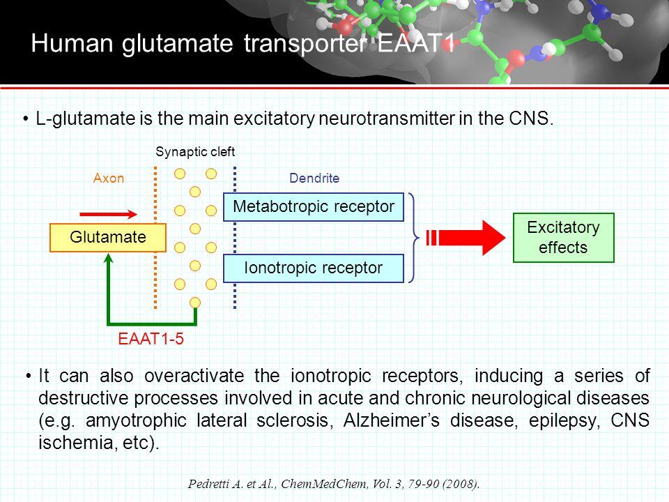 Human glutamate transporter EAAT1 Pedretti A. et Al., ChemMedChem, Vol.