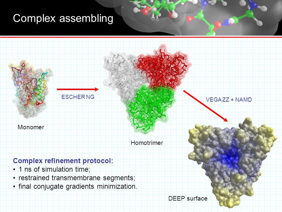Complex assembling ESCHER NG VEGA ZZ + NAMD DEEP surface Monomer Homotrimer Complex refinement protocol: 1 ns of simulation time; restrained transmembrane segments; final conjugate gradients minimization.