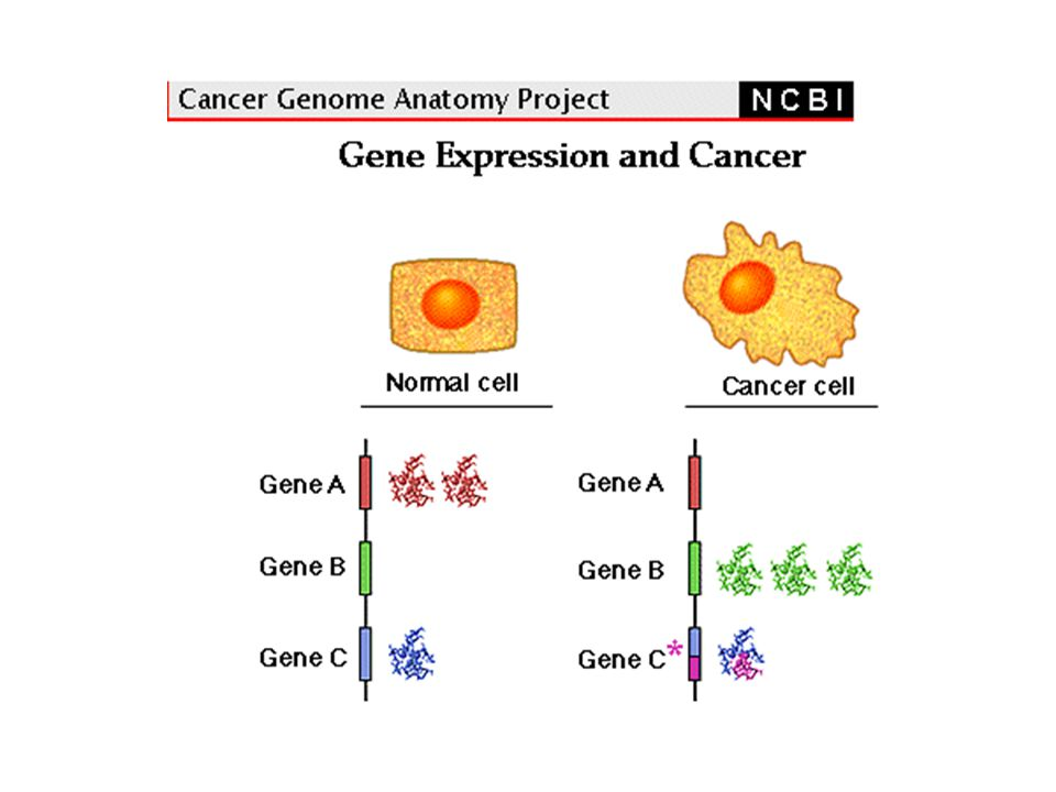 The Accumulation of Genetic Changes Underlies the Development and Progression of Cancer  Genetic pathways involved in tumorigenesis  Acquisition of invasive, metastatic, drug-resistant phenotypes  Somatic vs.