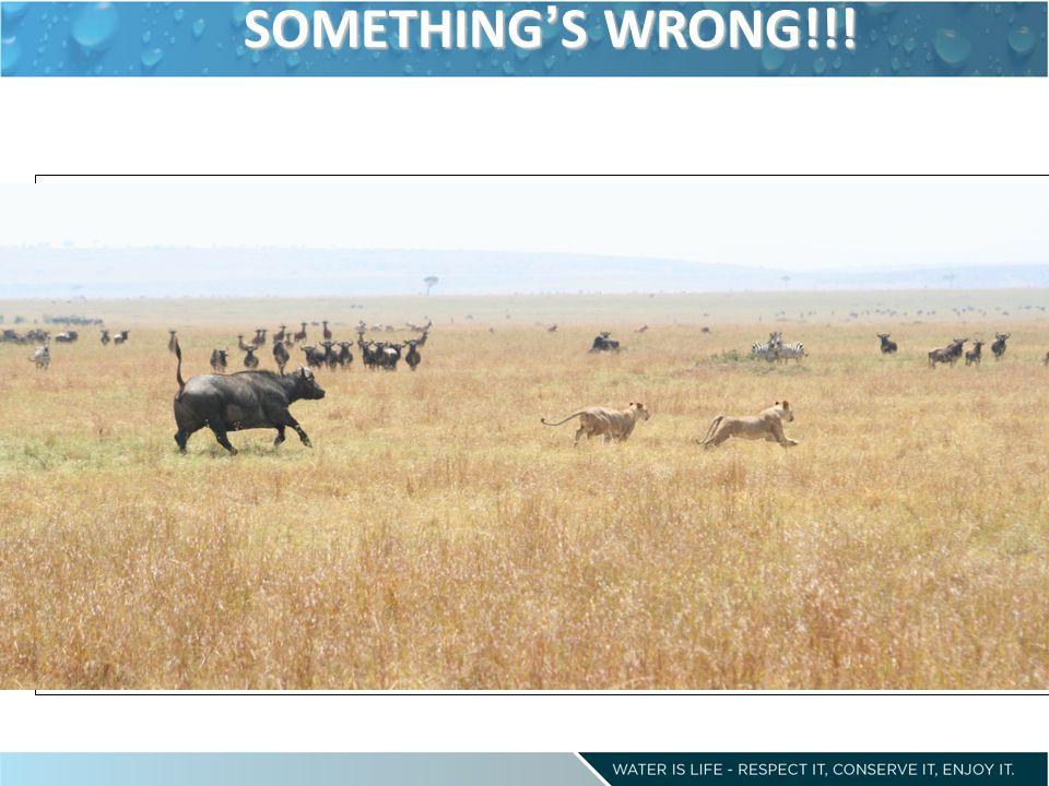 SOMETHING ' S WRONG!!!