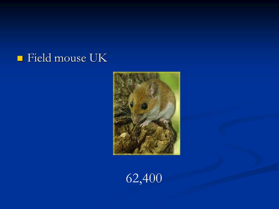 Field mouse UK Field mouse UK 62,400