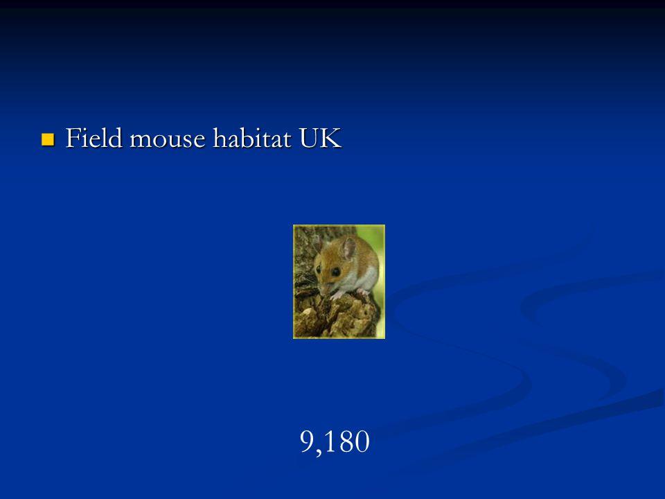 Field mouse habitat UK Field mouse habitat UK 9,180