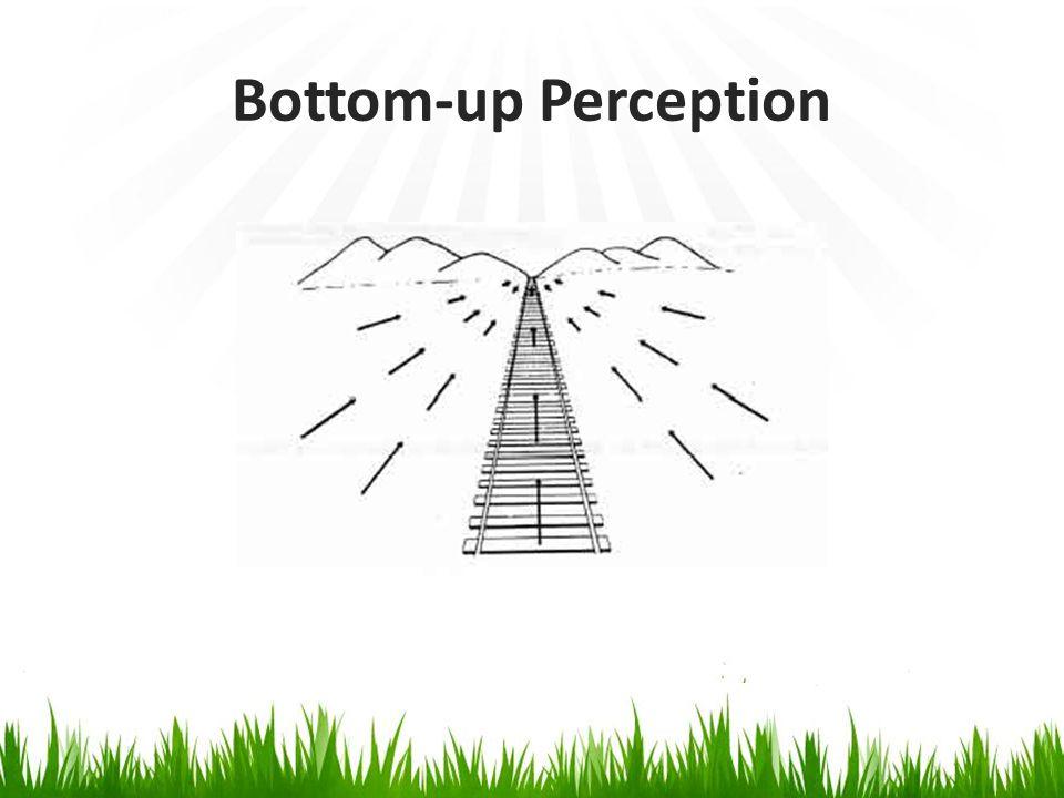 Bottom-up Perception