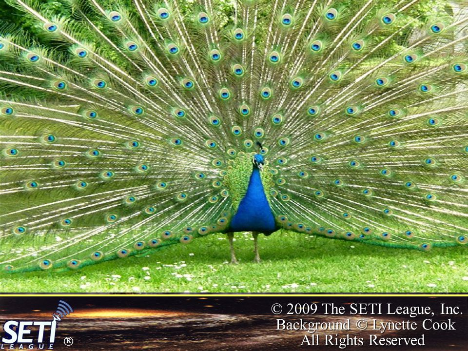  © 2009 The SETI League, Inc. Background © Lynette Cook All Rights Reserved