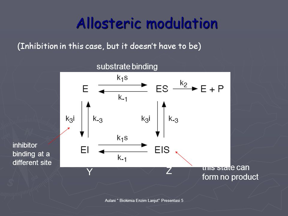 Aulani Biokimia Enzim Lanjut Presentasi 5 Allosteric modulation substrate binding inhibitor binding at a different site this state can form no product (Inhibition in this case, but it doesn't have to be) X Y Z