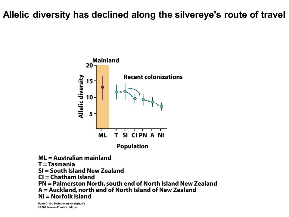 Allelic diversity has declined along the silvereye s route of travel