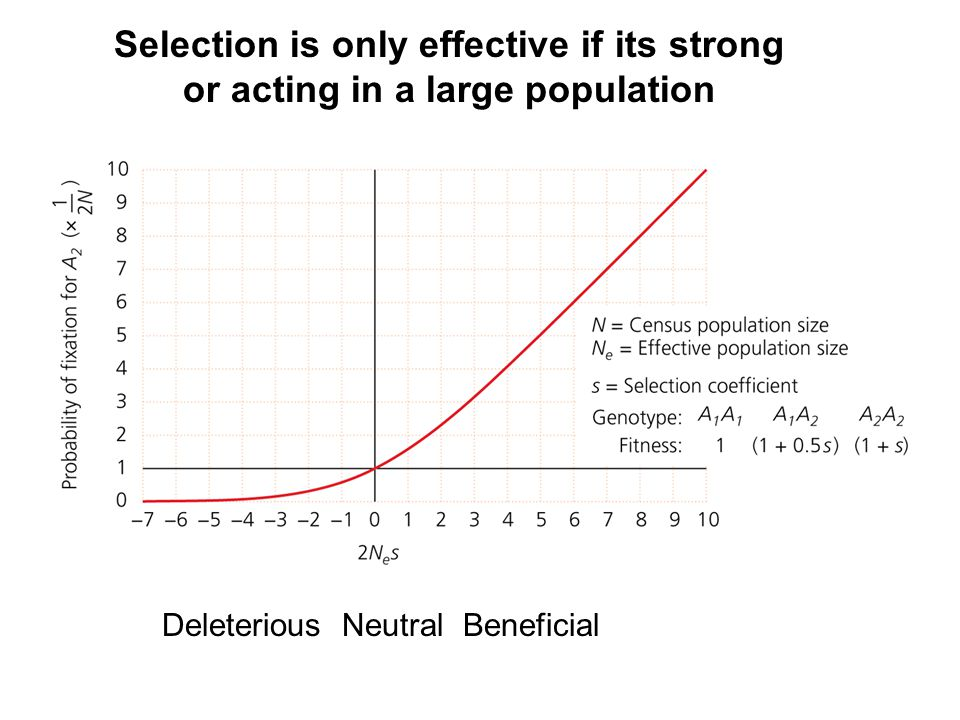 Selection is only effective if its strong or acting in a large population Deleterious Neutral Beneficial