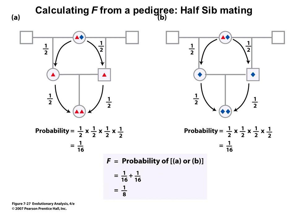 Calculating F from a pedigree: Half Sib mating