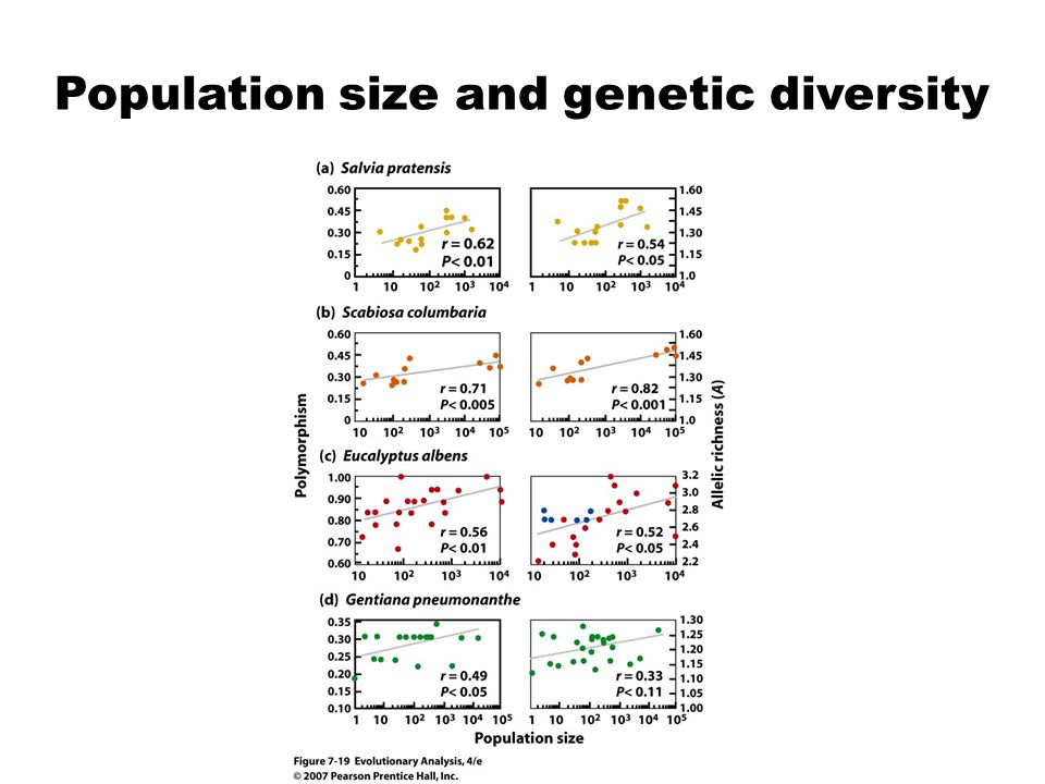 Population size and genetic diversity