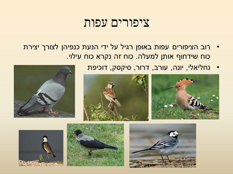 ציפורים עפות רוב הציפורים עפות באופן רגיל על ידי הנעת כנפיהן לצורך יצירת כוח שידחוף אותן למעלה. כוח זה נקרא כוח עילוי. נחליאלי, יונה, עורב, דרור, סיקס