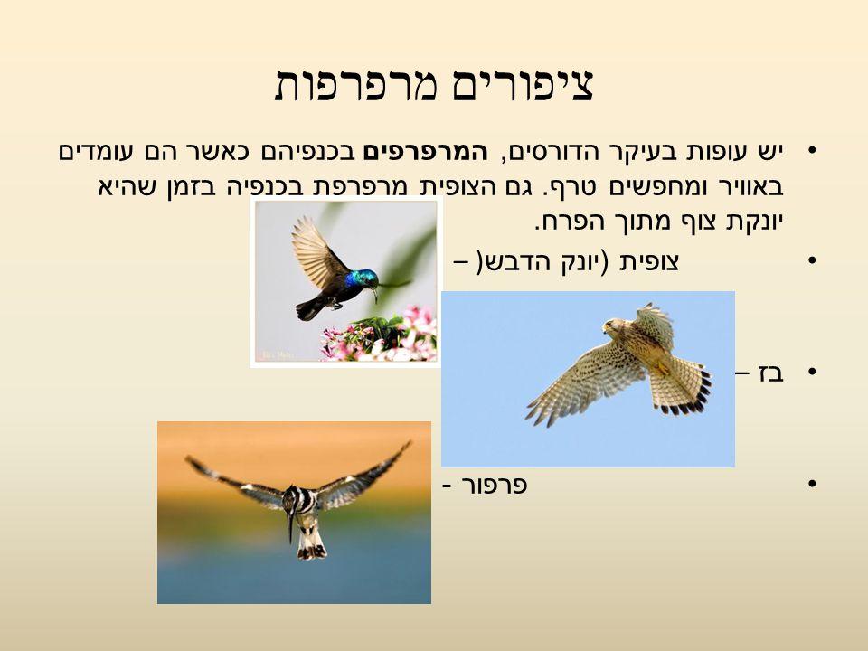 ציפורים מרפרפות יש עופות בעיקר הדורסים, המרפרפים בכנפיהם כאשר הם עומדים באוויר ומחפשים טרף. גם הצופית מרפרפת בכנפיה בזמן שהיא יונקת צוף מתוך הפרח. צופ