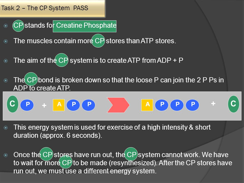 Task 2 – The CP System PASS  CP stands for Creatine Phosphate  The muscles contain more CP stores than ATP stores.
