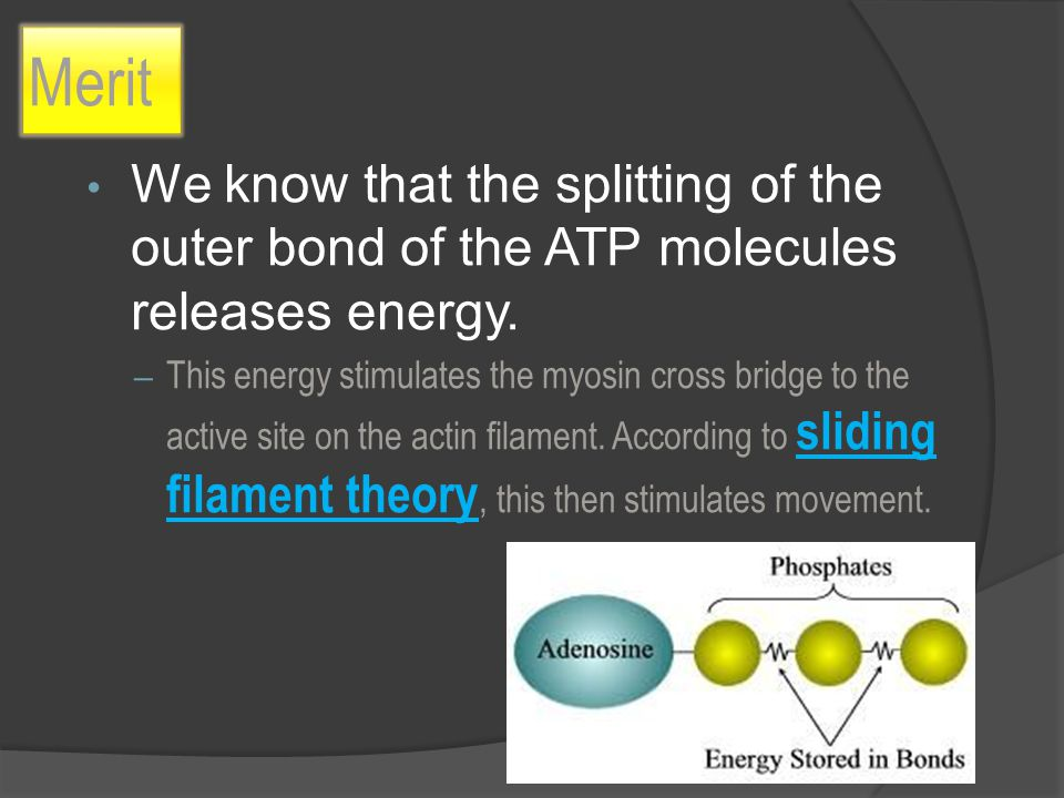 Merit We know that the splitting of the outer bond of the ATP molecules releases energy.