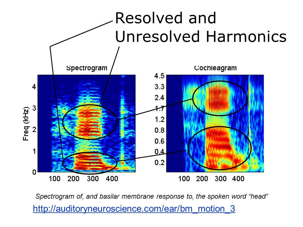 "Resolved and Unresolved Harmonics Spectrogram of, and basilar membrane response to, the spoken word ""head"" http://auditoryneuroscience.com/ear/bm_moti"
