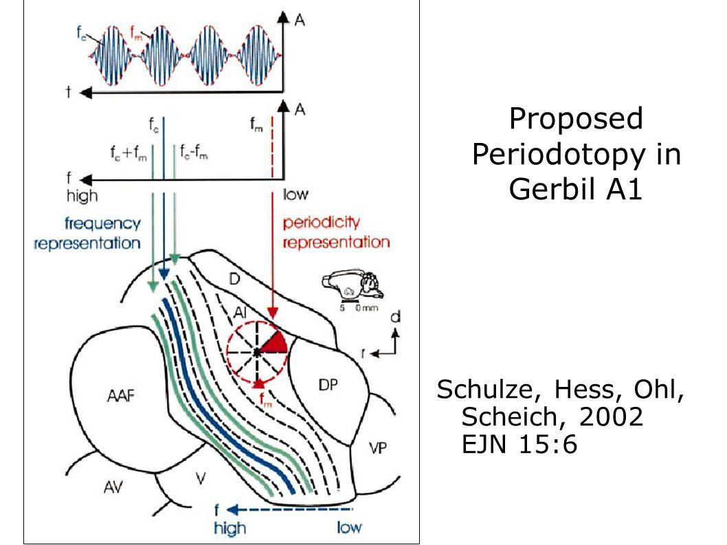 Schulze, Hess, Ohl, Scheich, 2002 EJN 15:6 Proposed Periodotopy in Gerbil A1