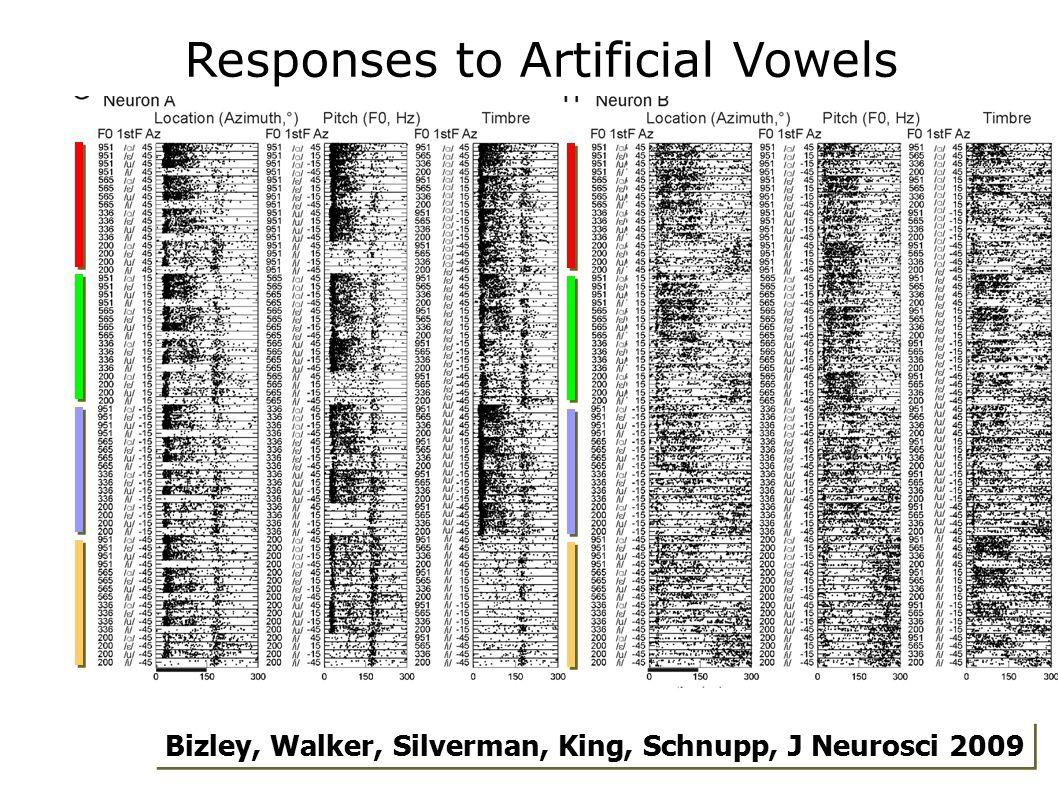 Bizley, Walker, Silverman, King, Schnupp, J Neurosci 2009 Responses to Artificial Vowels