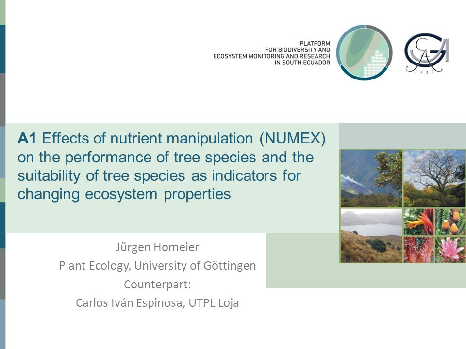WP1: Long-term effects of nutrient addition on tree growth and carbon allocation (NUMEX plots,1000–3000m asl) Methods  Monitoring of aboveground key parameters is continued: - Fine litter production and quality - Leaf parameters (foliar nutrients) - Stem growth (dendrometer tapes)  Focus on the belowground compartment: (PhD thesis Jhenny Salgado, started 10/2013) - Fine root biomass - Fine root production (ingrowth cores/rhizoscopes) - Coarse root growth (2 tree species per Numex site) +N+P ?