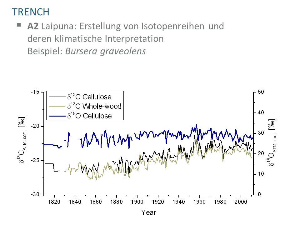 TRENCH  A2 Laipuna: Erstellung von Isotopenreihen und deren klimatische Interpretation Beispiel: Bursera graveolens