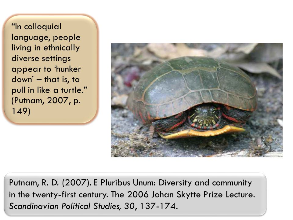 In colloquial language, people living in ethnically diverse settings appear to 'hunker down' – that is, to pull in like a turtle. (Putnam, 2007, p.