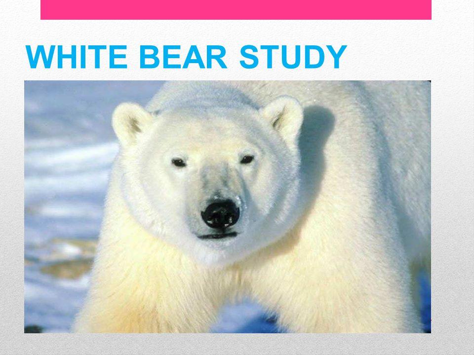 WHITE BEAR STUDY