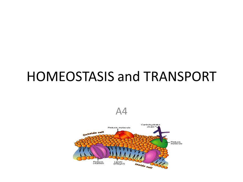 HOMEOSTASIS and TRANSPORT A4