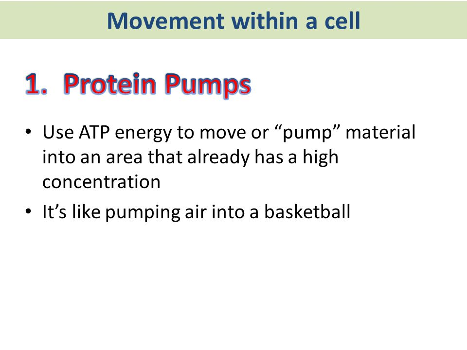 "Movement within a cell Use ATP energy to move or ""pump"" material into an area that already has a high concentration It's like pumping air into a baske"