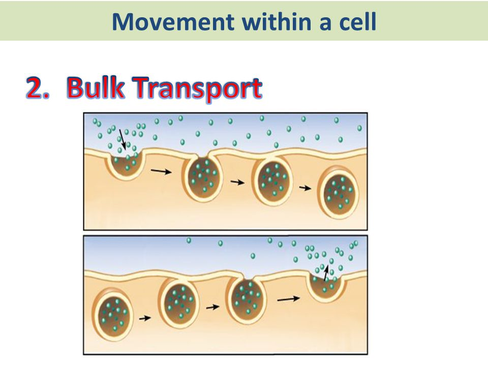 Movement within a cell