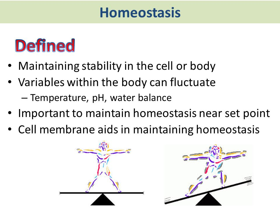 Homeostasis Maintaining stability in the cell or body Variables within the body can fluctuate – Temperature, pH, water balance Important to maintain h