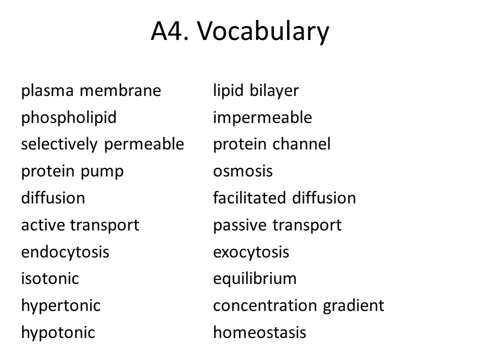A4. Vocabulary plasma membranelipid bilayer phospholipidimpermeable selectively permeableprotein channel protein pumposmosis diffusionfacilitated diff