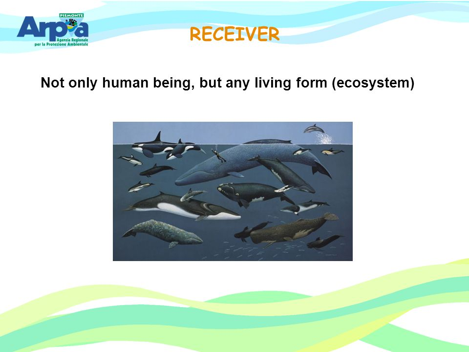 Not only human being, but any living form (ecosystem) RECEIVER